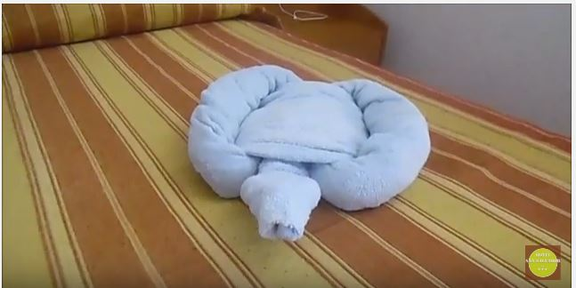 tartaruga-hotel san salvador-igea marina